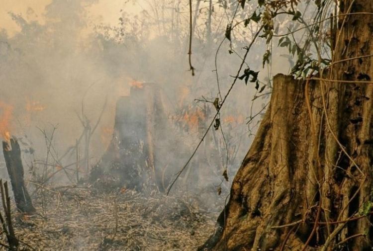 Gran parte della foresta amazzonica è diventata savana - Tiscali Ambiente