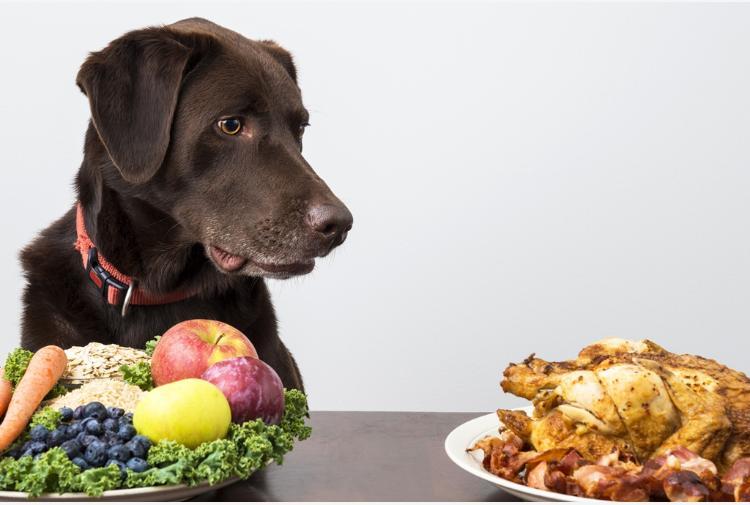 Pet Food Tra Ingredienti Tipologie Ed Etichette Ingannevoli Tiscali Ambiente