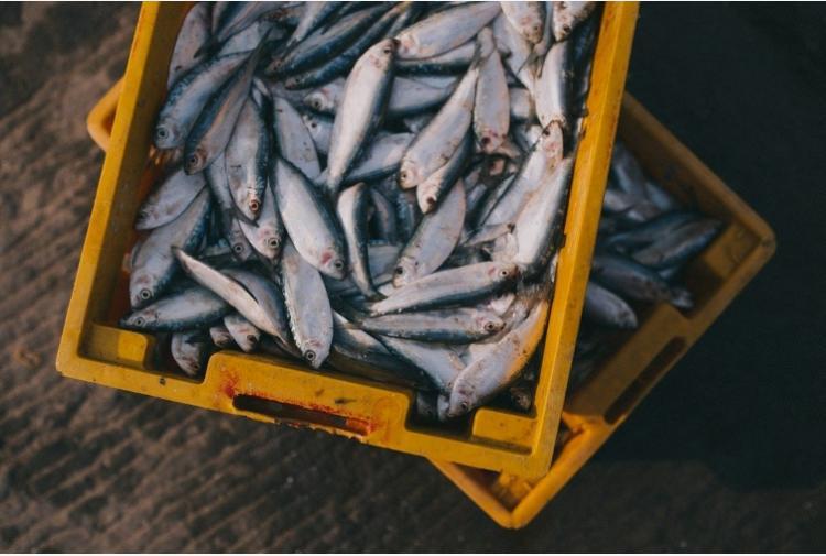 I Consigli Di Greenpeace Sul Consumo Di Pesce Tiscali Ambiente